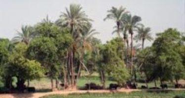 পূজোর সানাই বাজে